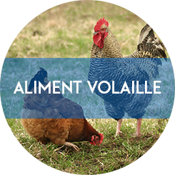 aliment volaille